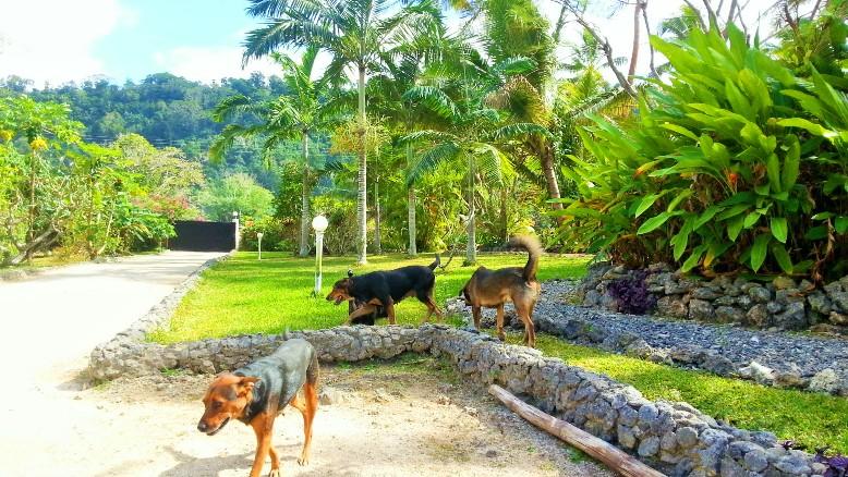 Organic Vanuatu